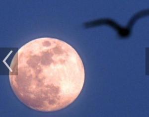 freedom moon
